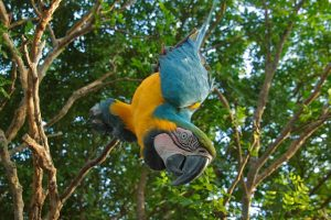 Parrot hanging in the Jungle