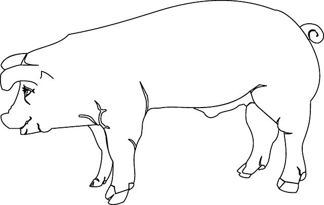Pig farm animal coloring page